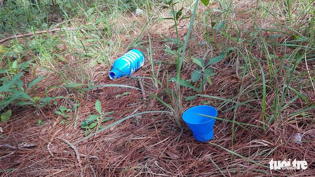 Hơn 600 cây thông tại Lâm Đồng lại bị đầu độc - Ảnh 2.