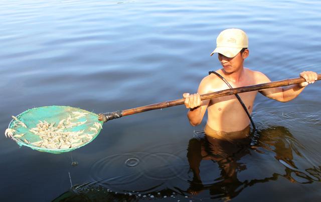 Hơn 100.000 con tôm trong hồ chết trắng, nghi bị đầu độc - Ảnh 1.