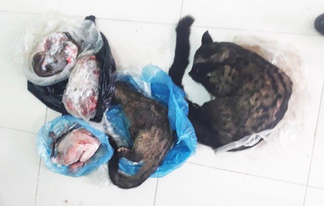 Bán thịt thú rừng qua Facebook, bị phạt 6 triệu đồng - Ảnh 1.