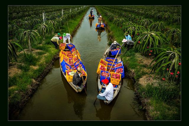 Ngây ngất với thiên nhiên và đời sống người Việt  qua ảnh - Ảnh 4.