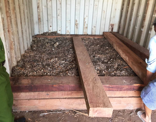 Phát hiện vảy tê tê ngụy trang trong gỗ nhập khẩu tại cảng Hải Phòng - Ảnh 1.
