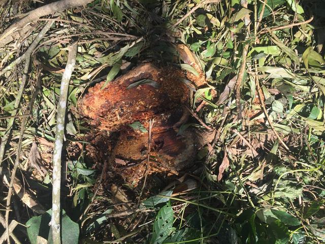 Ngang nhiên phá rừng đặc dụng trái phép ngay TP Thanh Hóa - Ảnh 1.