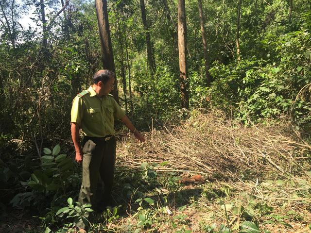 Ngang nhiên phá rừng đặc dụng trái phép ngay TP Thanh Hóa - Ảnh 2.
