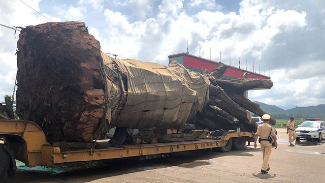Tạm giữ xe chở cây siêu khủng từ Đắk Lắk ra Ninh Bình - Ảnh 1.
