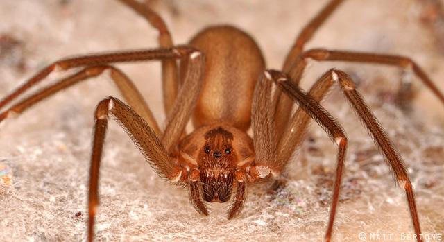 Vì sao tơ nhện mỏng nhưng mạnh hơn thép? - Ảnh 1.