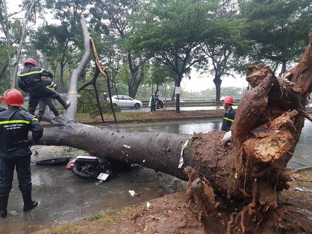 Bão số 9: cây xanh ngã đổ đè bẹp xe máy - Ảnh 4.