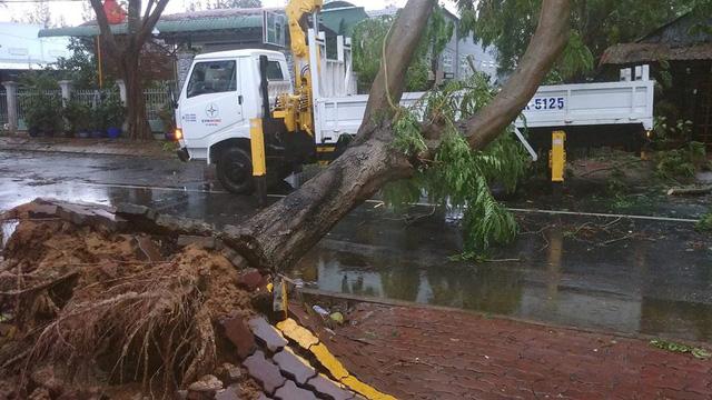 Bão số 9: cây xanh ngã đổ đè bẹp xe máy - Ảnh 3.