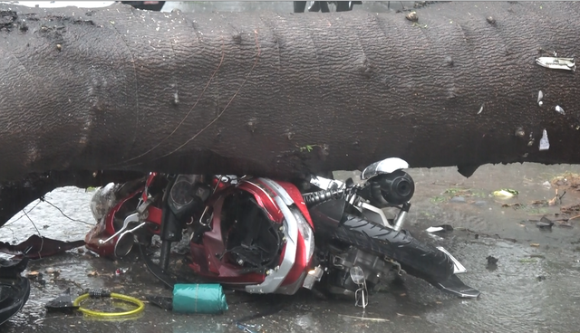 TP.HCM ngập diện rộng, cây ngã đè chết người đi đường - Ảnh 2.