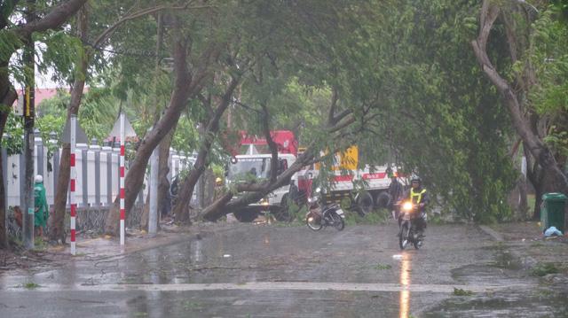Bão suy yếu thành áp thấp, TP.HCM mưa gió giật đổ cây - Ảnh 1.