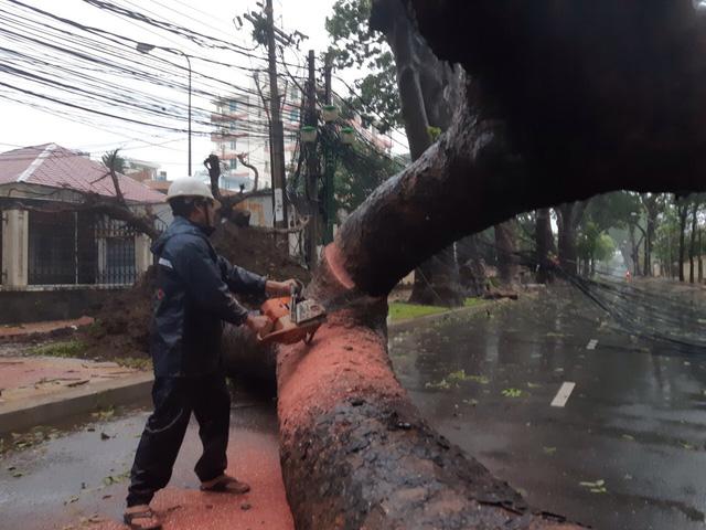 Nhiều cây cổ thụ bật gốc, ngã đổ tại Vũng Tàu - Ảnh 2.