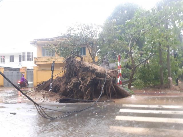 Nhiều cây cổ thụ bật gốc, ngã đổ tại Vũng Tàu - Ảnh 5.