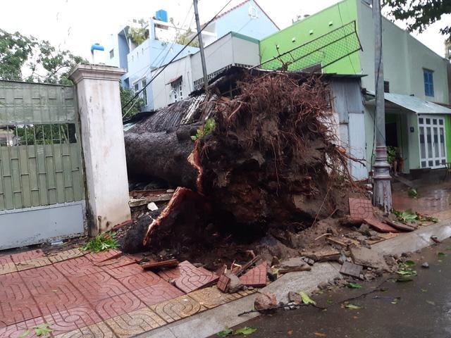 Nhiều cây cổ thụ bật gốc, ngã đổ tại Vũng Tàu - Ảnh 6.