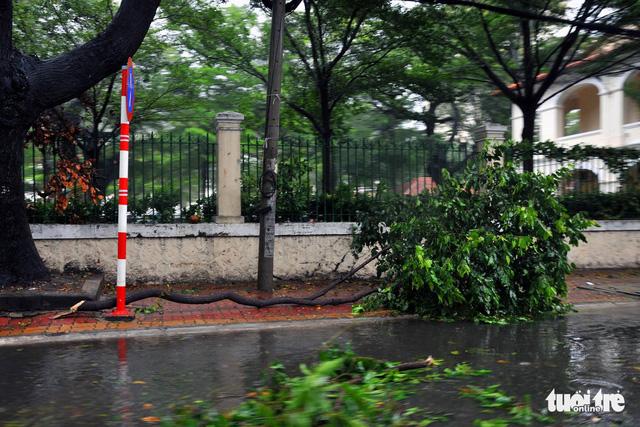 Vũng Tàu bắt đầu mưa to, cây gãy đổ - Ảnh 2.