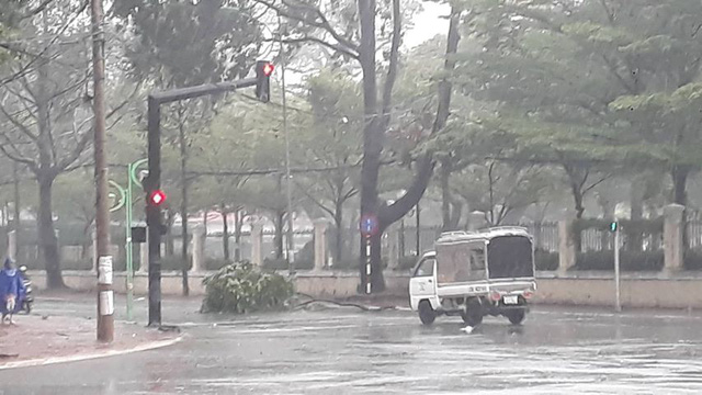 Vũng Tàu bắt đầu mưa to, cây gãy đổ - Ảnh 8.