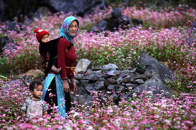 Khai mạc Lễ hội hoa tam giác mạch trên Cao nguyên đá Đồng Văn - Ảnh 1.