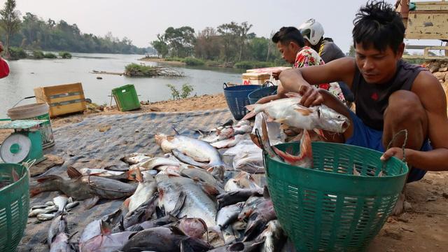 Campuchia muốn xây hồ giữ lại cá sông Mekong cho mình - Ảnh 1.