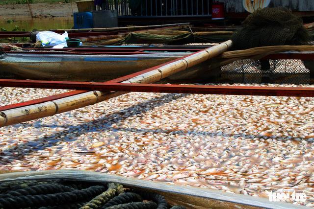 Hỗ trợ 12,2 tỉ đồng cho 129 hộ dân nuôi cá lồng bè trên sông La Ngà - Ảnh 2.