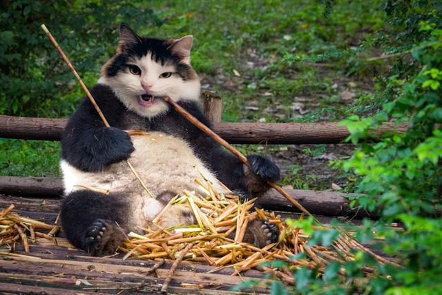 Khi mèo không phải là...mèo - Ảnh 3.
