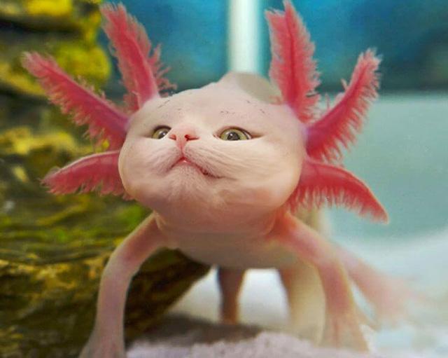 Khi mèo không phải là...mèo - Ảnh 6.