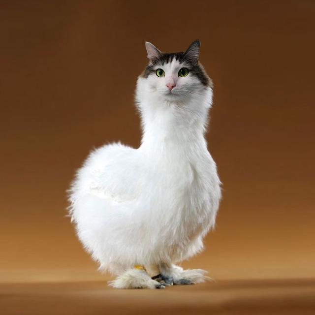 Khi mèo không phải là...mèo - Ảnh 1.