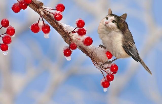 Khi mèo không phải là...mèo - Ảnh 2.