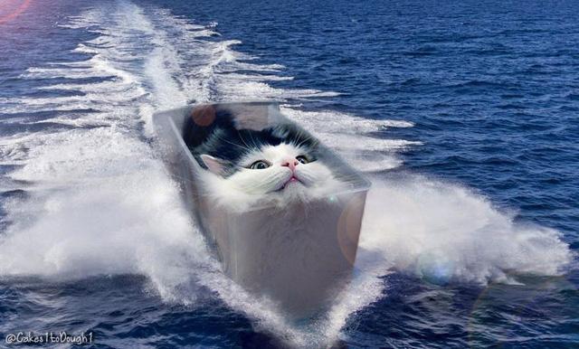 Khi mèo không phải là...mèo - Ảnh 10.