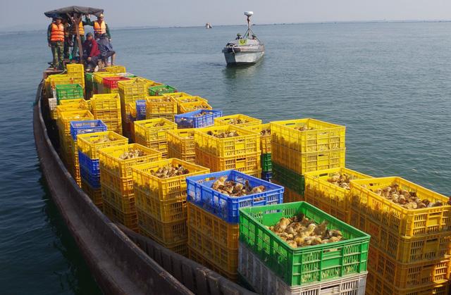 Bắt thuyền chở 50.000 gà giống từ Trung Quốc về Việt Nam - Ảnh 1.