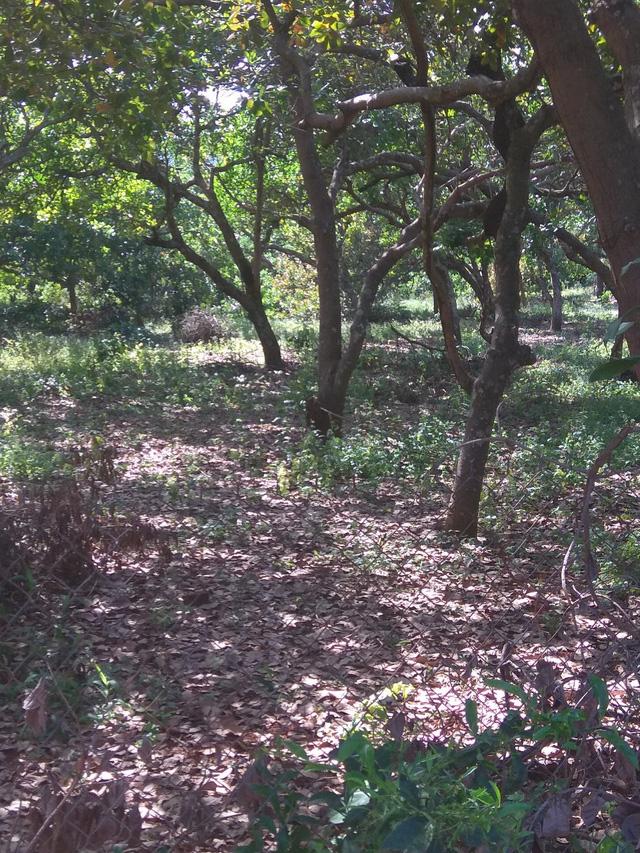 Cưa trộm cây trong rẫy còn chém vào đầu chủ vườn - Ảnh 1.