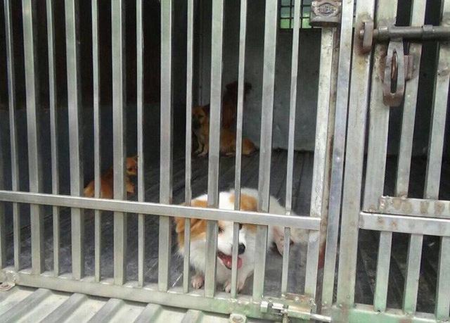 Hà Nội thành lập đội săn bắt chó thả rông - Ảnh 1.