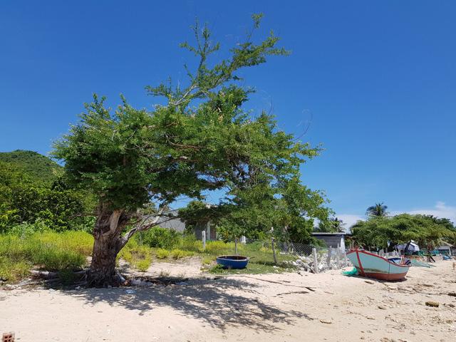 Đảo Điệp Sơn  sau 1 năm hứng bão lịch sử Damrey - Ảnh 11.