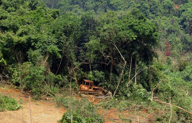 2 hecta rừng tự nhiên biến mất trong báo cáo gửi UBND tỉnh - Ảnh 1.