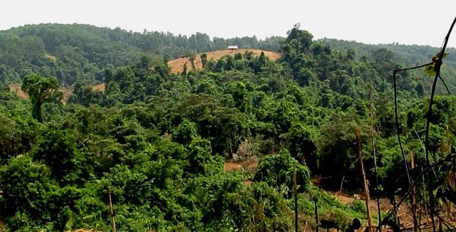 2 hecta rừng tự nhiên biến mất trong báo cáo gửi UBND tỉnh - Ảnh 3.