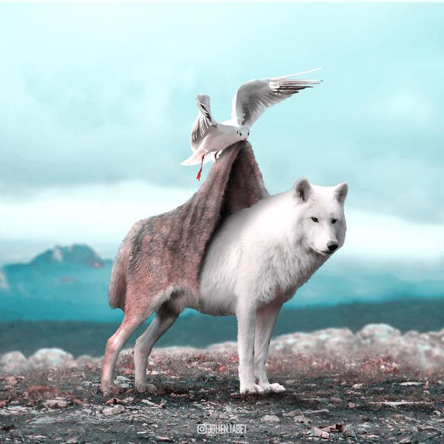 Động vật trong mắt thánh photoshop - Ảnh 13.
