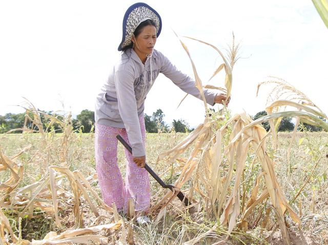 Ninh Thuận mưa ít, các hồ chứa tiếp tục trơ đáy - Ảnh 4.