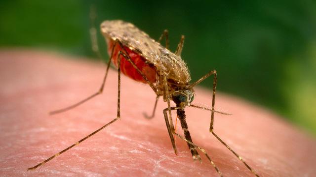 Nghiên cứu phương thức mới tiêu diệt mầm bệnh sốt rét trong gan - Ảnh 1.