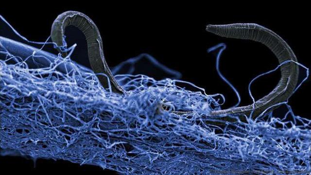 Có tới 15-23 tỉ tấn vi sinh vật dưới mặt đất - Ảnh 1.