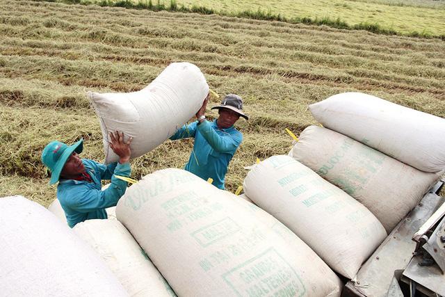 Thủ tướng yêu cầu tăng dự trữ 200.000 tấn gạo để chặn đà giảm giá - Ảnh 1.