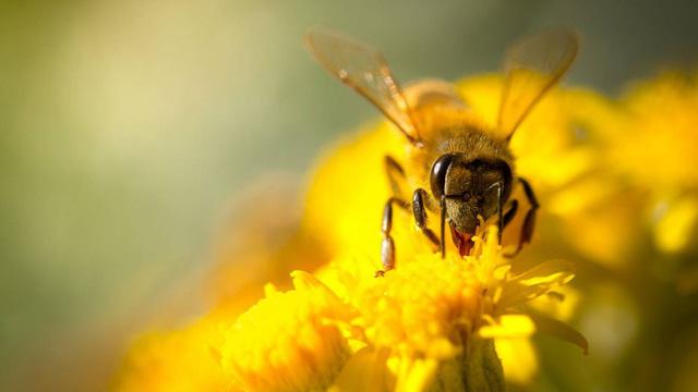 Cây cối cũng biết nghe tiếng côn trùng? - Ảnh 1.