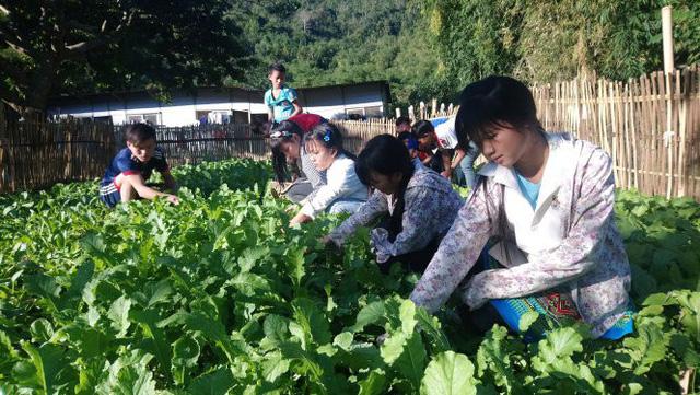 Thầy trò trồng rau, nuôi heo gây quỹ lớp, giúp học sinh nghèo - Ảnh 1.