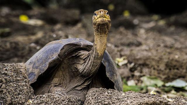 Phát hiện bí quyết sống lâu của con rùa 100 tuổi - Ảnh 2.