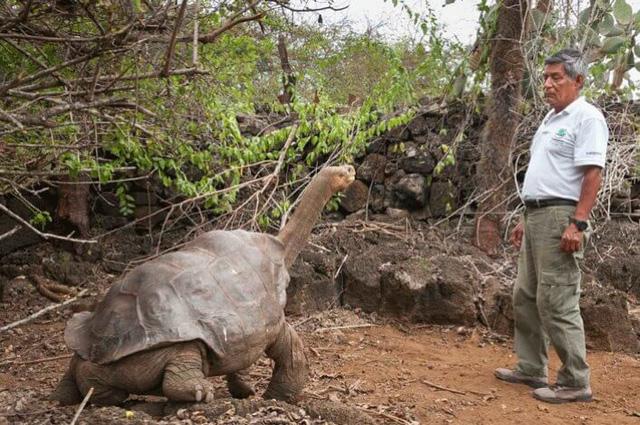 Phát hiện bí quyết sống lâu của con rùa 100 tuổi - Ảnh 1.