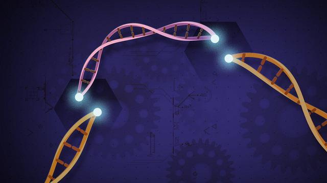 Chỉnh sửa gen - kỹ thuật và đạo đức - Ảnh 5.