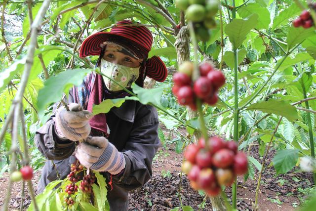 Thủ tướng Nguyễn Xuân Phúc: Cần hình thành một tầng lớp nông dân mới - trẻ, có khát vọng - Ảnh 2.