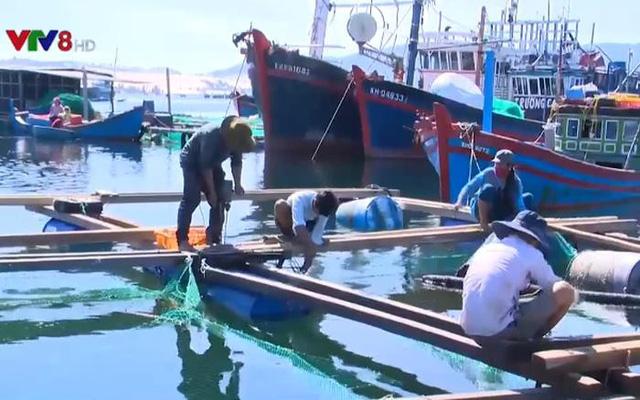 Cảnh báo tảo độc trên vịnh Vân Phong - Ảnh 1.