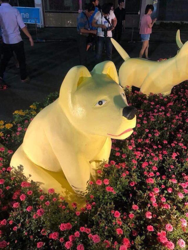 Chó con sầu buồn ở đường hoa 'hờn cả thế giới'? - ảnh 3