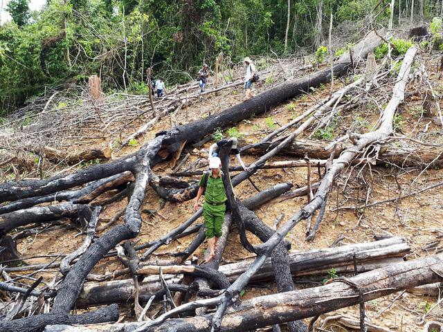 Đề nghị truy tố vợ chồng phá 3,6ha rừng phòng hộ Tiên Lãnh - Ảnh 1.