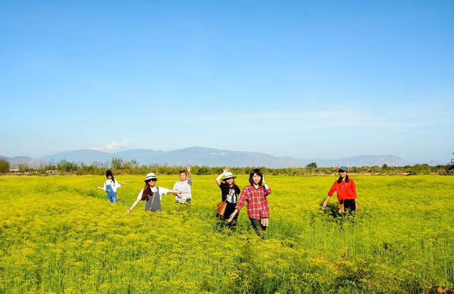 Cánh đồng hoa Ninh Thuận đóng cửa vì bị du khách dẫm nát - Ảnh 4.
