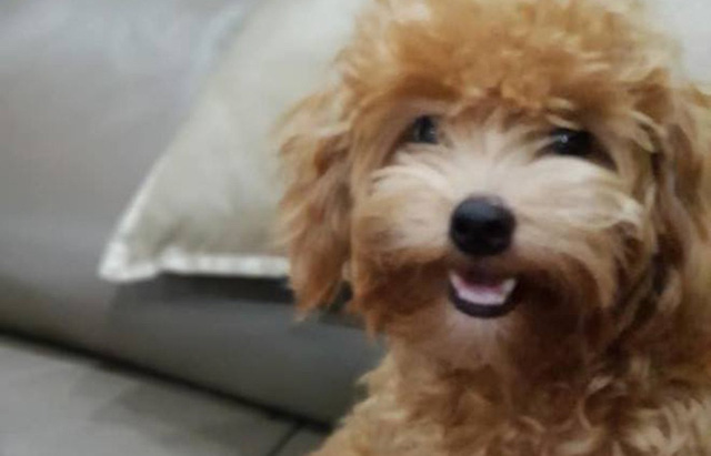 Trợ lý HLV Park hỗ trợ gia đình chú chó cứu chủ vụ cháy Carina - Ảnh 2.