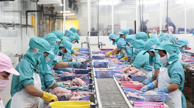 Miền Tây có gần 600 tỉ đồng sản xuất cá tra giống - Ảnh 2.
