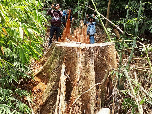 Cận cảnh rừng lim xanh bị lâm tặc xẻ thịt - Ảnh 5.